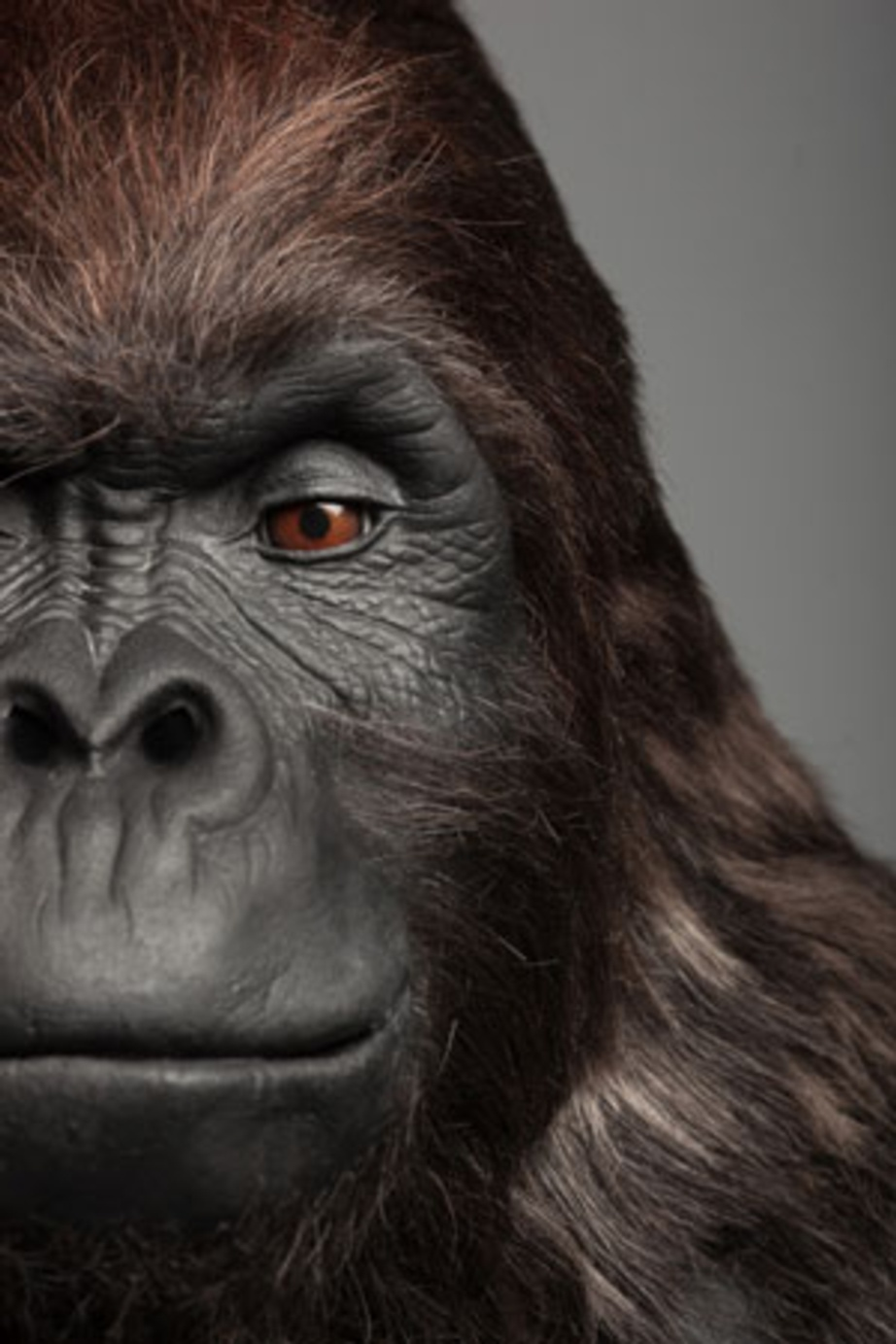 Gorilla Glue Returns To Tv Stax Trade Centres